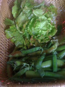 Fresh Picked, Lettuce, Peas and Beans