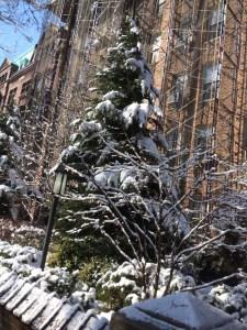 SnowNYC