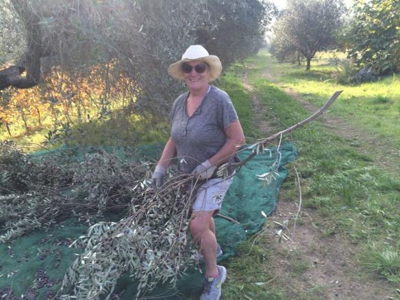 olivespastavinopicking