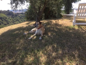 Jpeg in the shade of an olive tree